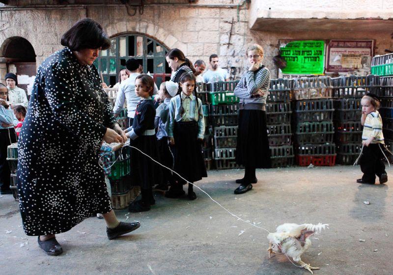 Подготовка к капарот, ритуалу Йом-Кипура (Судного дня). Считается, что грехи прошедшего года передаются курице, после чего пернатое хватают за лапы и размахивают им над головой.